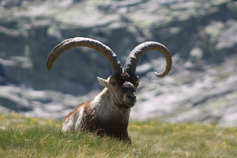 Group IBEX ZONE