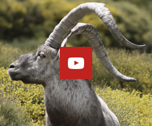 feed youtube channel ibex zone