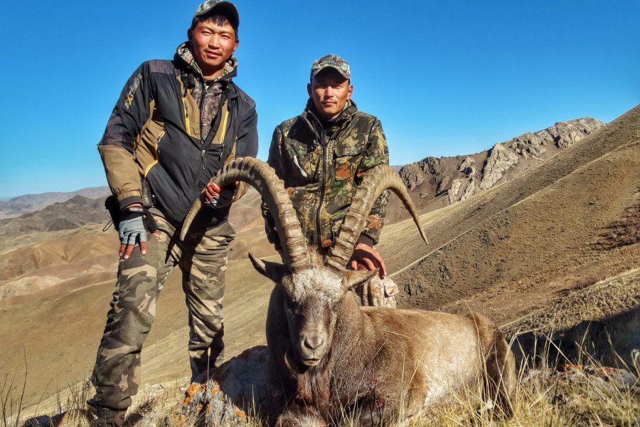 Altai Ibex
