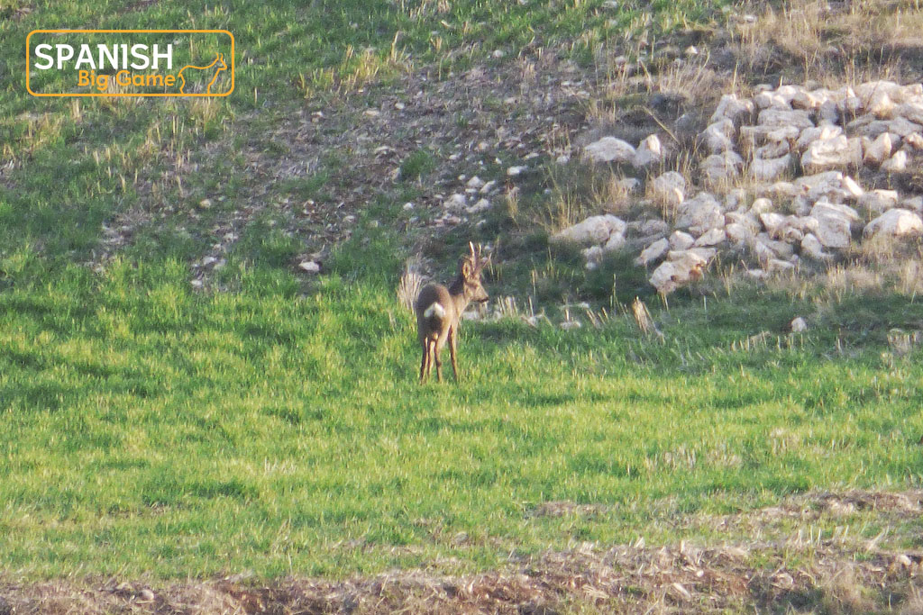 April means : ibex hunt but also roe deers